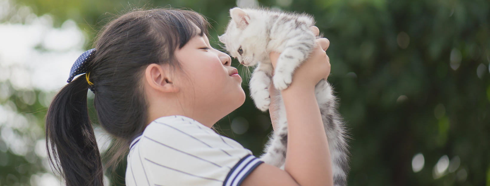 5 Easy Ways to Ensure Your Newly Adopted Kitten Gets Closer to You