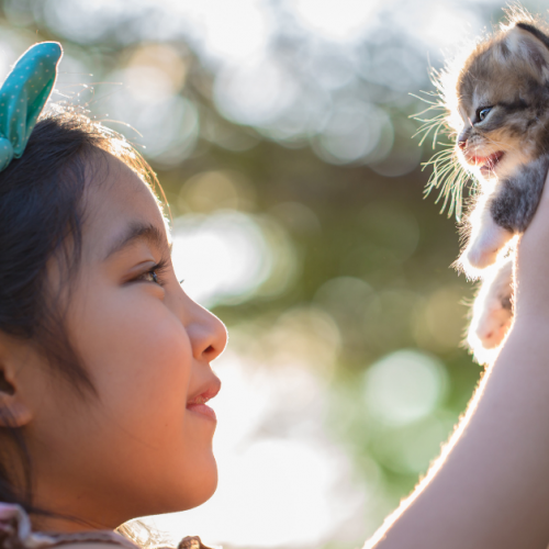 New-to-Pet-Parenting-3-Quick-Tips-in-Raising-Your-Kitten-Right